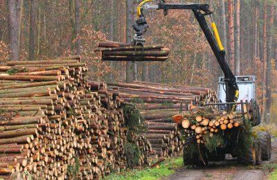 Pandemia închide o fabrică de lemn din Braşov. Compania va păstra doar 260 de angajaţi din cei 350