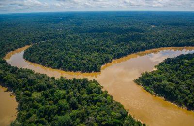 Studiu alarmant: Pădurea amazoniană a emis mai mult CO2 decât a absorbit