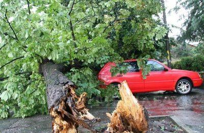Vânt violent: 27 de copaci, doborâţi pe maşini sau pe străzi, în Bucureşti, în ultimele ore. Avertizarea meteo continuă